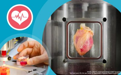 Scientists print a 3D heart using stem cells