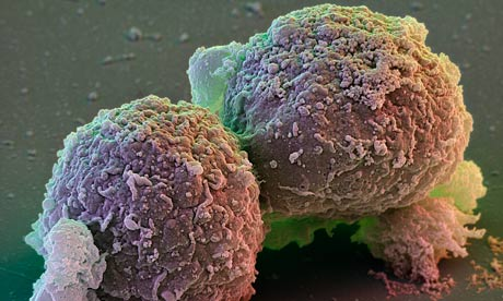 Look, no embryos! The future of ethical stem cells